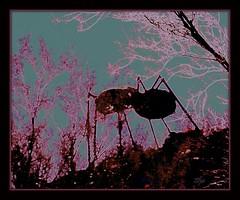 on the hunt (milomingo) Tags: pink arizona sculpture black southwest art texture phoenix silhouette bug insect aqua purple desert teal ant hill surreal frame them organic multicolored photoart arid trippin desertbotanicalgarden a~i~a