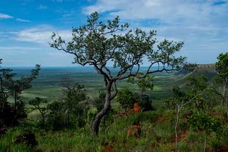 Árvore na Serra do Espírito Santo