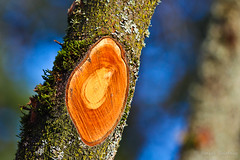 Its all about colors (EighteenPercentGray) Tags: wood blue tree nature canon outdoor t3i 600d canonef70200mmf40lusm