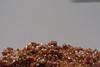 DSC04457-9 (jasonclarkphotography) Tags: newzealand christchurch fish salzburg history animals museum austria europe honeymoon natural sony nex canterburynz nex5 jasonclarkphotography