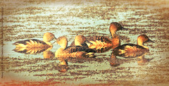 Fulvous Whistling-ducks painted (NancySmith133) Tags: painterly photopainting photographlikepainting fulvouswhistlingducks centralfloridausa lakeapopkawildlifedrive