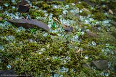 Shattered glass (Mike van Houwelingen - DiverseMediaNL) Tags: art broken glass train diverse artistic trains trainstation shattered glas trein treinen scherven treinstation emmerich kapot emerich dmart diversemedia diversemedianl rt310116