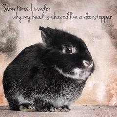 Sometimes I Wonder (Jeric Santiago) Tags: pet rabbit bunny animal conejo lapin hase kaninchen   doorstopper compositephotography sometimesiwonder rabbitbit