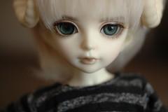 Icarus (TeaPartyRevolution) Tags: el bjd icarus fairyland balljointeddoll whiteskin yosd littlefee