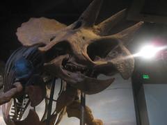 IMG_4179 (FigmentJedi) Tags: minnesota dinosaurs sciencemuseumofminnesota