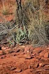 Hike / caminata - Bear Mountain - Arizona (Mike's Mode (Miguel H.)) Tags: trees arizona moon arboles hiking hike luna bearmountain pines agave opuntia caminata yucca sendero rocas