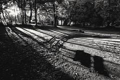 A bench [06/02/2016 explored]. (soothe_my_soul) Tags: park light shadow urban blackandwhite bw monochrome bench landscape mood fuji noiretblanc lumire explorer nb ombre explore fujifilm sunburst paysage schwarzweiss parc fujinon bnw banc urbain 1024 sunstar explored xt1 bnwhite fujifilmxseries fujifilmxt1 fujinon1024 xf1024rois