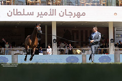 Force Amazing ! (Meshari Fahad) Tags: horses force arabian showing riyadh canon7d