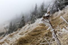 _MG_1082 (schamrock77) Tags: winter italy mountain ice freezing natura inverno montagna friuli ghiaccio galaverna canon6d 35f2is