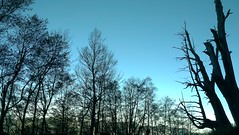 Fuci Trees(Couple Trees) (Xinyi Township, Nantou County) (TsengNN) Tags:  xinyi nantou   coupletrees eyetaiwan  fucitrees