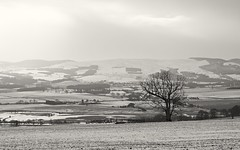 Ochils (spodzone) Tags: trees winter blackandwhite snow mountains art nature monochrome weather sepia rural lens landscape photography scotland flora warm unitedkingdom pastel perthshire places equipment zen vista moment pastoral toned creamy gbr ochilhills forteviot rawconversion pentax50mmf17 rawtherapee filmemulation photivo syntheticfujiprovia100