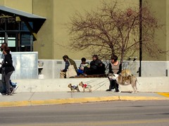 . (suenosdeuomi) Tags: people dogs farmersmarket benches canons90
