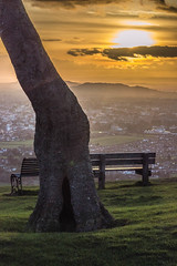 Hiding Place - Cleeve Hill, Gloucestershire. (Jeremiah Huxley Productions) Tags: england gloucestershire cheltenham cleevehill