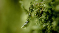 Moss (ricardo.fromm) Tags: park green nature colors canon moss natur leipzig grn makro moos spaziegang 1200d