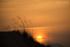 sunset (RenField - Toel-ul Laputa) Tags: sky orange sun nature japan evening nikon kagoshima 300mm 日本 nikkor 自然 夕日 空 すすき 夕焼け 鹿児島 kirishima silvergrass 日没 ニコン 単焦点 霧島市 サンヨン d800e
