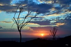 Desnudos (Explore 23-marzo-2016) (ZAP.M) Tags: naturaleza contraluz andaluca flickr cielo nubes cdiz siluetas chiclana novosanctipetri mwn amaneceryatardecer zapm mpazdelcerro