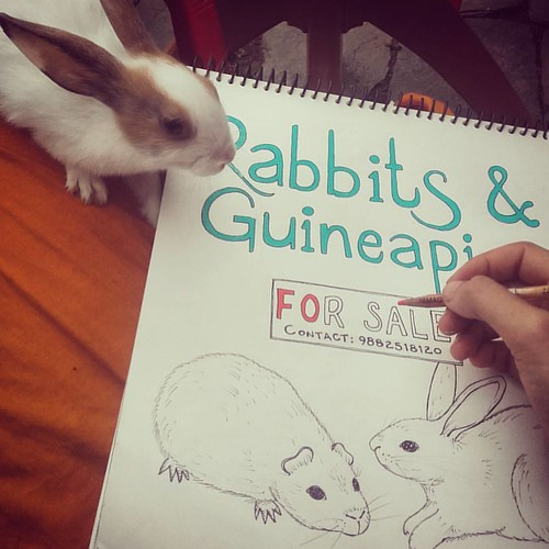 Had lots of fun sitting in the garden yesterday making a little poster for my host family in Dharmakot. Hari Baba breeds the friendliest bunnies I have ever met....cute!!