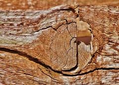 Looking through (dlanor smada) Tags: wood brown abstract fences knots