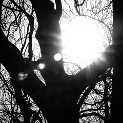 MonoSquare-9 (Mark James Griffiths) Tags: blackandwhite bw sun tree monochrome square fuji lensflare sunburst sunflare nailsea xpro1 monosquare fujixpro1 xf60mm