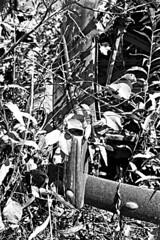 150731-3110 (aisbain) Tags: ontario canada trash america classiccar vintagecar decay oldtimer junkyard scrapyard wreck amerika kanada on schrott wrack salvageyard cargraveyard unknowncar autofriedhof pave yourstodiscover bilkyrkogrd aisbain bilskrot autokerkhof theboneyard skrotbiler skogsvrak nikond700 bilkirkegrd cementeriodecoches vrakbiler thorstenmller cemitriodeautomveis cimetiredevoitures bilskrotar sigma1828 thorstenmueller editioneinblick cimiterodiautomobile autojenhautausmaa thorstenmuller tantdcouvrir joemartelle