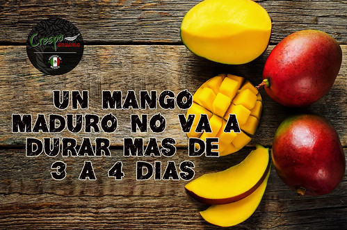 "Mango Maduro • <a style=""font-size:0.8em;"" href=""http://www.flickr.com/photos/139081453@N03/25896937621/"" target=""_blank"">View on Flickr</a>"