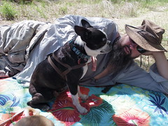 Ivan and Chad, April 18 (EllenJo) Tags: arizona bostonterrier pentax chad ivan relaxing az digitalimage riparian olddog verdevalley clarkdale bytheriver dayusearea ellenjo ellenjoroberts verderivergreenway bornin2004 april2016 tuzirap pentaxqs1