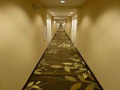 hallway in douglas wyoming hotel (army.arch) Tags: carpet hotel hall hallway wyoming douglas wy