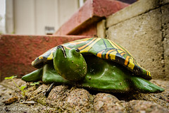 087366  2016  turtle (Doug Churchill) Tags: yards pet pets beautiful beauty statue mobile comfortable yard backyard turtle quality lawn calming calm intelligence turtles enjoy harmony simplicity enjoys balance strength 365 wisdom figurine optimist comfort bliss simple backyards beauties optimism stable enjoying balancing enjoyment mellow tenacity lawns mobility perseverance intelligent calmness fortitude comforting comforts persevere tenacious optimistic blissful stability 366 mellows reassurance balances reassuring optimists calms blissfulness reassure persevering mellowing project366 perseveres enjoyments reassures sonyrx100m3