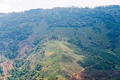 Darjeeling Tea Garden, Darjeeling, India (CamelKW) Tags: india tea teagarden darjeeling hillstation teaplantation hilltown