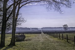 View on the Moor and ice-age boulder (ParadoX_Design) Tags: mist tree grass fog iceage fence early haze nikon heather sunny boulder moors heathland d5300