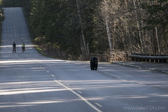 "Black Bear on Going-to-the-Sun Road • <a style=""font-size:0.8em;"" href=""http://www.flickr.com/photos/63501323@N07/26303763120/"" target=""_blank"">View on Flickr</a>"