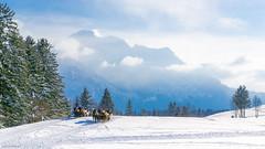 hotel-auswahl220150204 (allgaeubilder) Tags: winter de bayern deutschland brunnen landschaft pferde allgu schwangau rotwild pferdeschlitten wildftterung winterlandschaftbrunnen