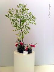 Ikebana ( Graa Vargas ) Tags: flower ikebana iphone graavargas appleiphone4 2016graavargasallrightsreserved