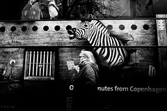 Zoo has come to town (Jan Jespersen) Tags: street urban blackandwhite bw animal copenhagen denmark zoo photo streetphotography ricoh ricohgr kbenhavn urbanscenes blackandwhitephotography urbanlife janjespersenphotography