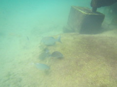 Xel-Ha Park, Mexico (Stefan Candie) Tags: travel vacation fish nature mexico honeymoon underwater snorkel snorkeling caribbean rivieramaya tropicalfish xelha 2016