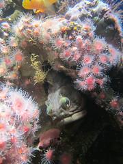 IMG_0402.jpg (Kuruman) Tags: sanfrancisco california usa aquarium us monterey