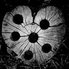 (aspidistraphy) Tags: blackandwhite monochrome mono shot holes cracks conceptual blackholes bnw