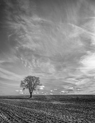 I think we're alone now (grbush) Tags: sky bw tree monochrome field clouds rural landscape countryside blackwhite oak farm bedfordshire minimalism minimalist lonetree tokinaatx116prodxaf1116mmf28 sonyslta77