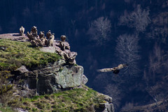 ItsusikoHarria-44 (enekobidegain) Tags: mountains montagne vultures monte euskalherria basquecountry bui pyrnes pirineos mendia buitres paysbasque nafarroa pirineoak bidarrai saiak vautours itsasu itsusikoharria