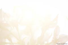 DSC_8534 (Frankie Tseng ()) Tags: park pink flowers sunset sky bw flower silhouette photography 50mm blackwhite nikon outdoor flash sunny tokina cherryblossoms fade nikkor 70300mm tamron 90mm f8 1224mm f28 f4 1870mm bwphotography blackwhitephotography portraitphotography outdoorportrait sb900 yongnuo outdoorportraitphotography yn568