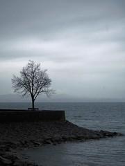 Solitude (isabelle bugeaud) Tags: gris eau solitude pluie lac ciel arbre constance autriche digue