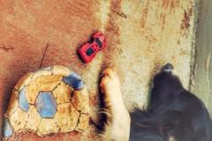 playground (Rodrigo Alceu Dispor) Tags: dog pet car playground ball toy
