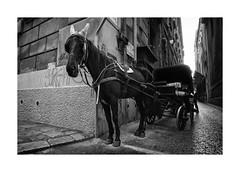 Black Horse / Palermo / Sicilia (jyotichandra) Tags: horse monochrome monocromo sicily palermo sicilia monocrome sonya6000 samyang12mm