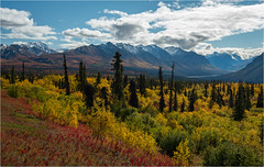 Colorful Alaska (Waldemar*) Tags: autumn usa mountains fall nature colors alaska clouds season landscape outdoors nikon scenery colours view outdoor scenic foliage highway1 vista range tundra wrangell glennhighway glennallen tajga afs1635mmf4gvr d800e waldemarhalka wwwhalkaphotocom