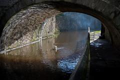 The sun the smoke and the swan-9257 (rich01535) Tags: bridge winter light sun reflection wet water dark canal swan nikon colours path walk smoke warmth reflected fullframe towpath lightanddark wintersun d610 nikond610