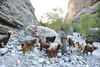 Wadi Nakhr, Oman. (chimck) Tags: asia middleeast arabia oman 阿曼