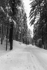 Where is my Sled? (punahou77) Tags: california winter blackandwhite snow nature nationalpark roadtrip pines yosemite yosemitenationalpark wilderness sierras yosemitevalley stevejordan nikond7100 punahou77
