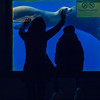 blue cuddle desire (Soenke HH) Tags: barcelona blue children photography zoo hands wasser child silhouettes olympus kinder seal cuddle contact moment blau tierpark robbe fins farben e5 augenblick unterwasser streicheln unterwasserwelt kontakt silhouetten olympuse5