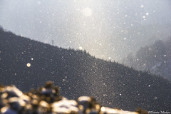 Snowflakes (DobriMv) Tags: snowflake winter light mountain snow nature landscape nationalpark europe outdoor ridge bulgaria eastern balkan stara planina