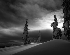Winter Light (Svein Nordrum) Tags: trees winter light shadow sky blackandwhite bw snow nature clouds woods scenery explore wintertime explored